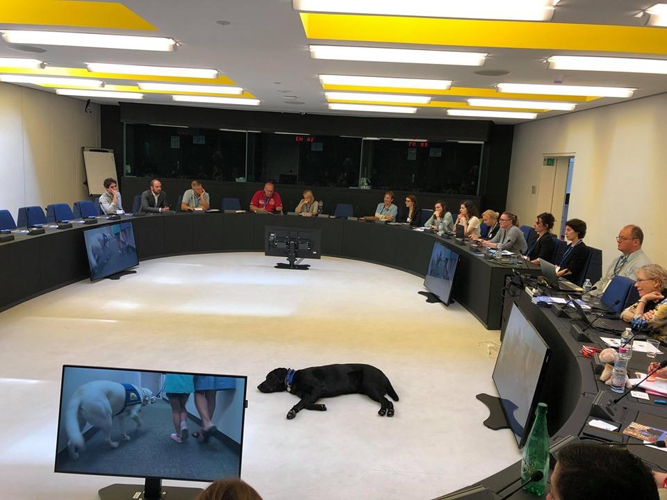 """Ein ausgebildeter Gerichtslabrador im """"Einsatz"""" bei der diesjährigen Fachkonferenz von Victim Support Europe."""